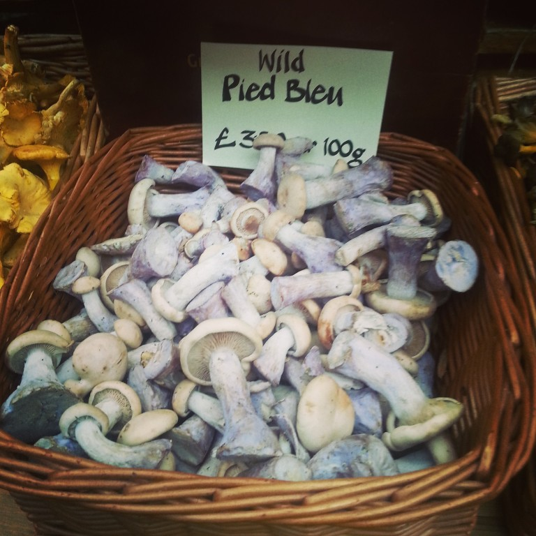 7. Wild blue mushrooms